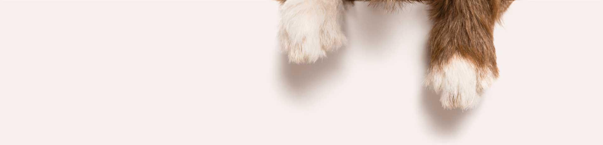 Branding, packaging and website Design for Dog food supplements