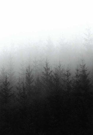 Website design forest image